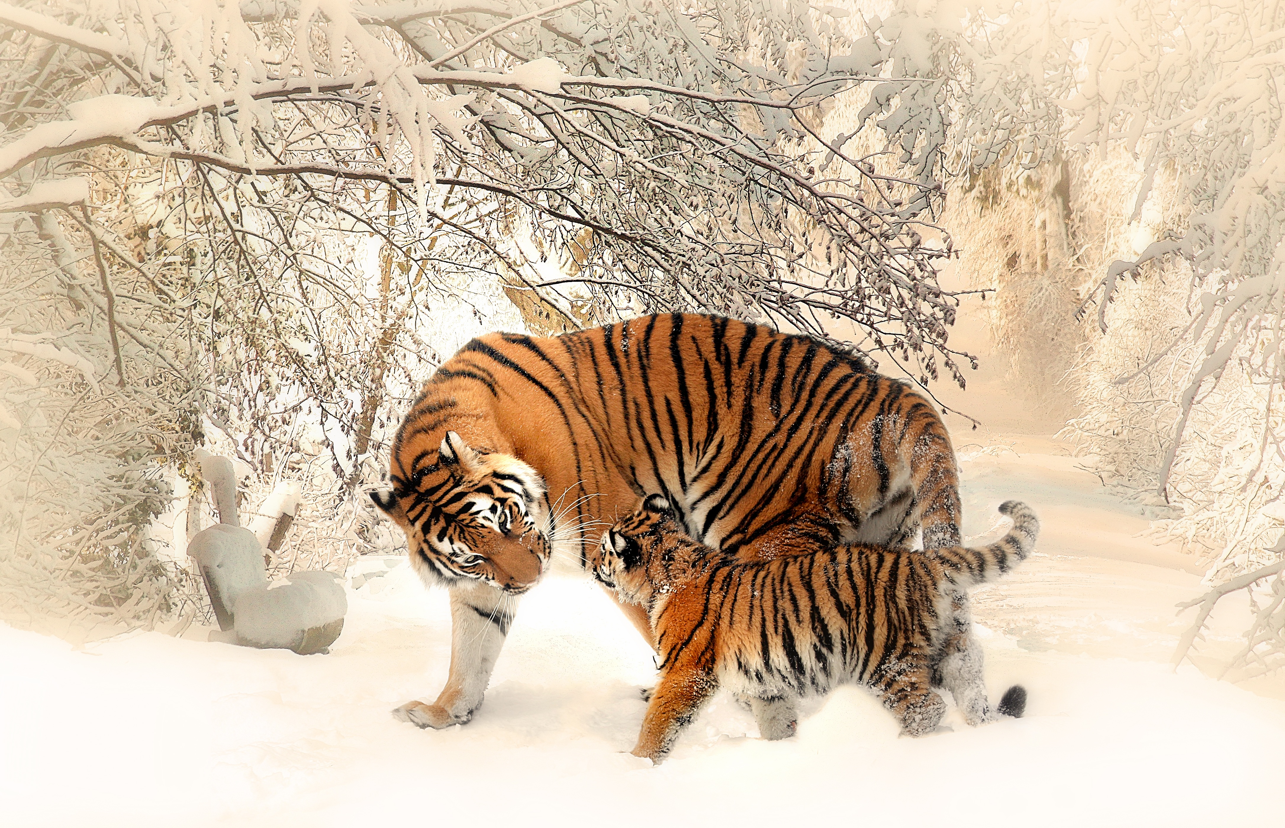 tiger-withBabyInSnow