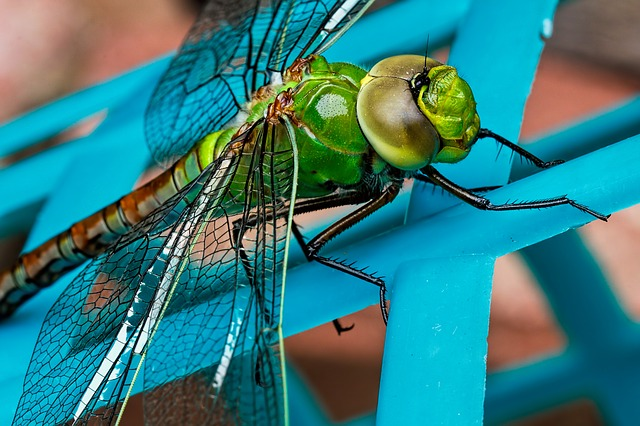 dragonfly-441624_640