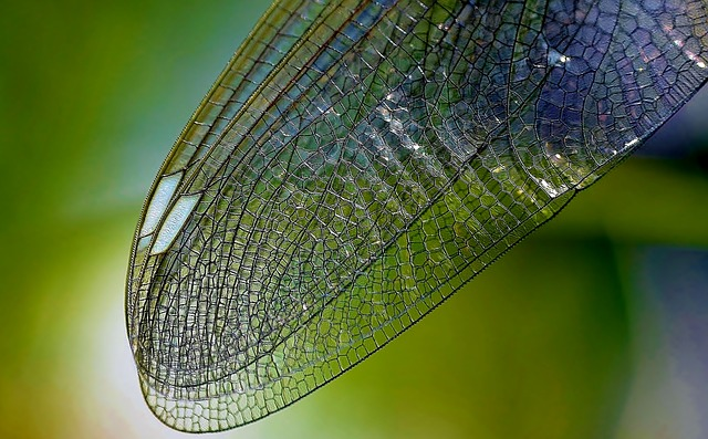 dragonfly-wing-615240_640