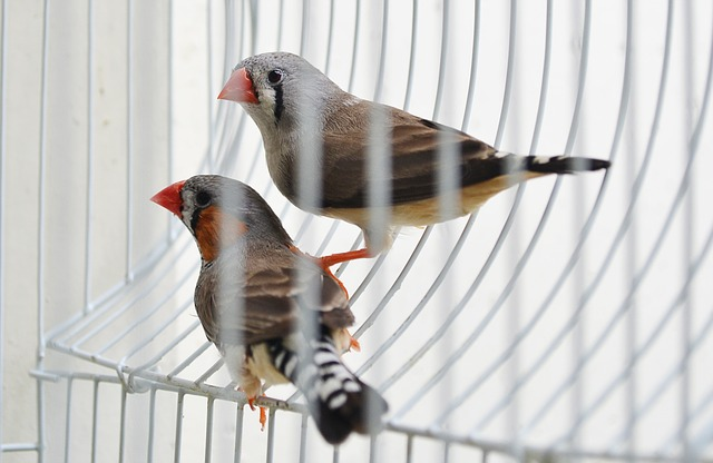 finches-213176_640