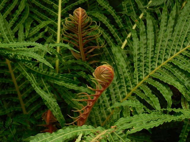 fronds-290848_640