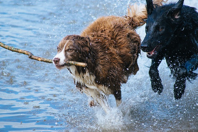 dogs-1246588_640 (1)